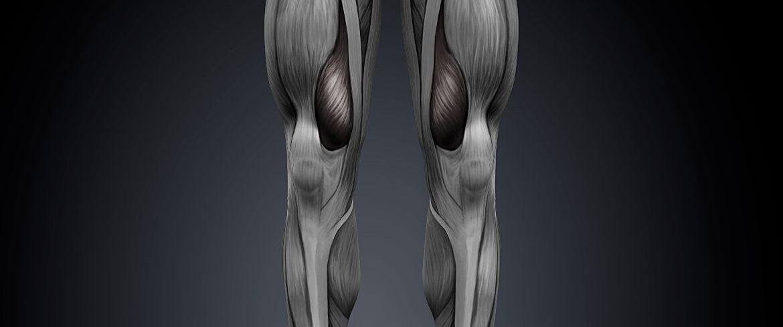 Vastus Medialis – Anatomy, Purpose, Treatment + Injury Prevention